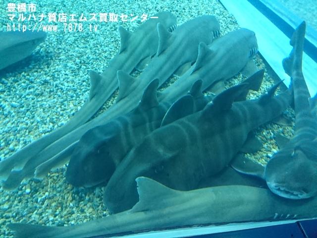 マルハナ質店エムズ買取センター サメ